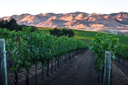 Salinas Valley Vineyards